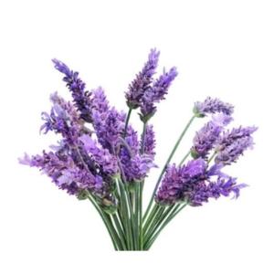 Naso Lavender